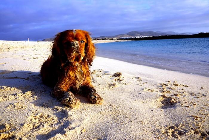 Paulo a adoré les plages de Fuerteventura !!