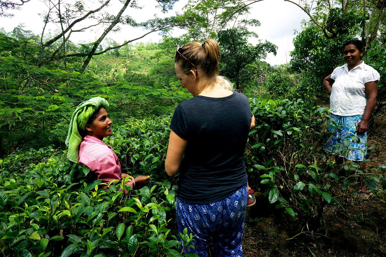 Ballade dans les plantations de thé