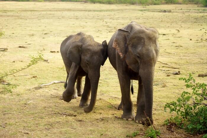 Nous avons pu observer plusieurs éléphants dans ce parc national.