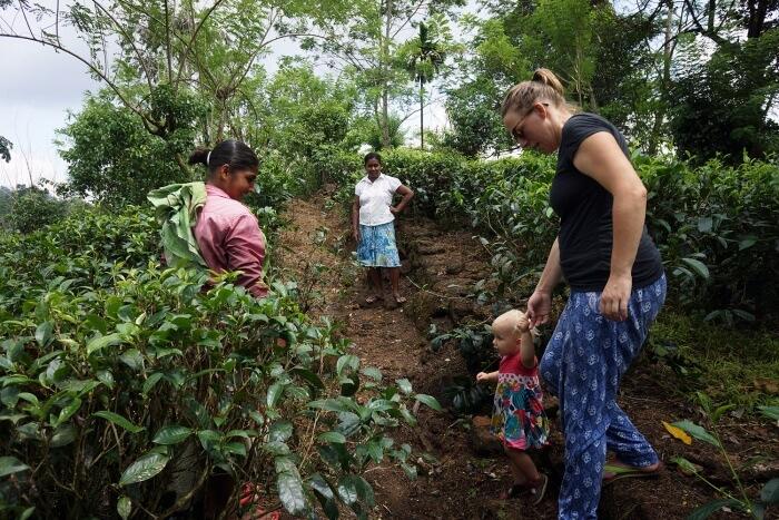 Ballade dans les plantations de thé de nos hôtes autour de leur maison.