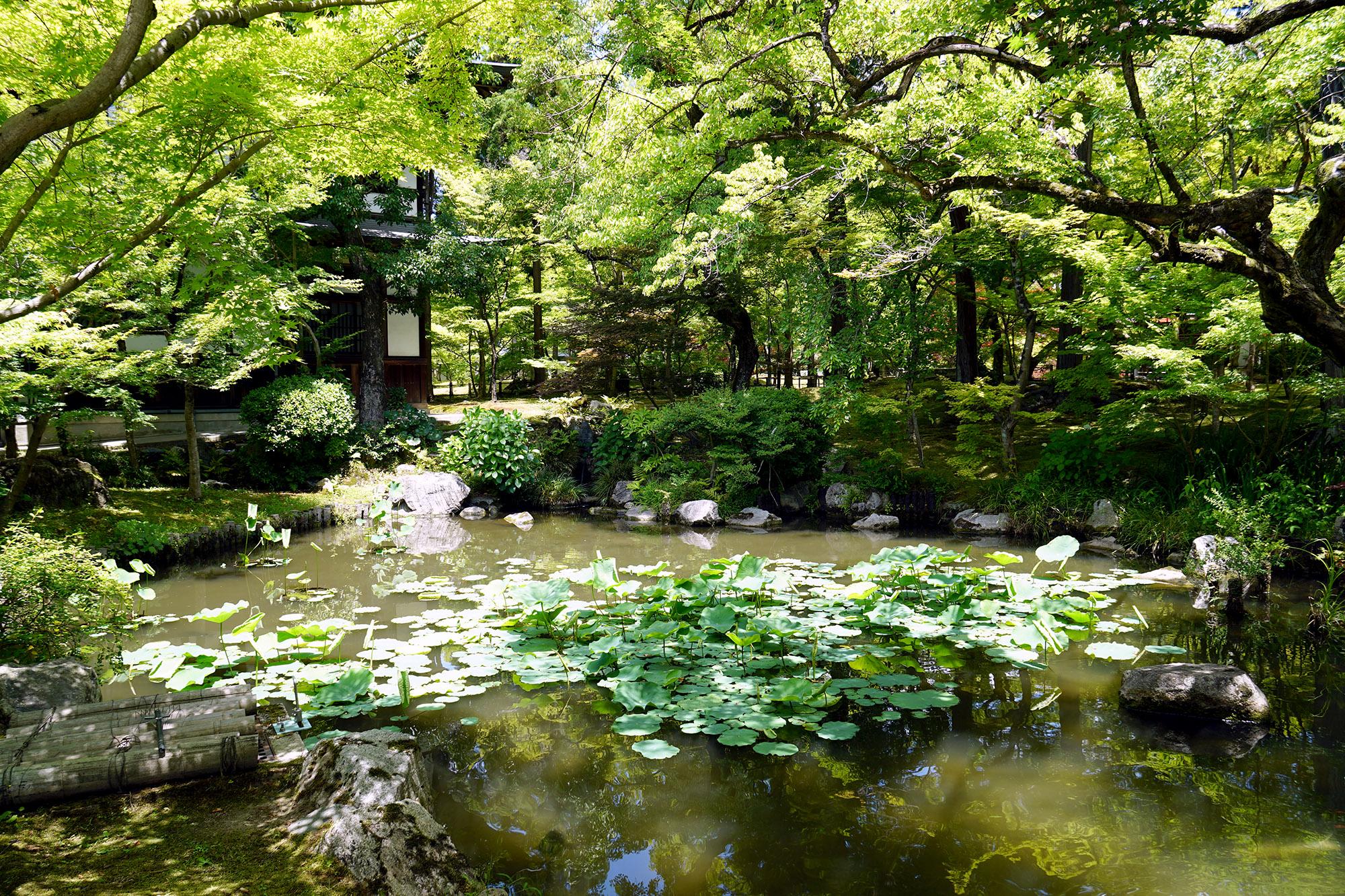Il y a plusieurs parcs sur Kyoto aussi beaux les uns que les autres !