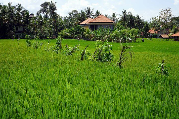Nous sommes toujours à Ubud (Bali) où nous faisons une petite «pause» depuis 2…