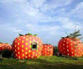 Ce soir, nous dormons dans une FRAISE au milieu d'un champ de fraises. Et…