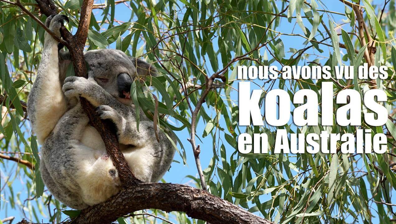 Aujourd'hui, nous avons vu des koalas (ou des «lolalas» comme dirait Éléanor !) dans…