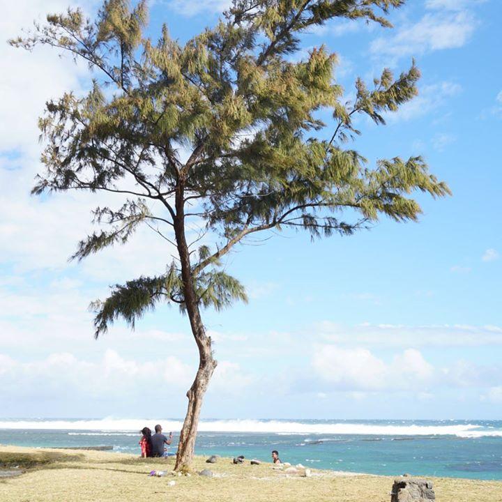 Nous sommes arrivés samedi à la Réunion où nous allons rester 2 mois !!…