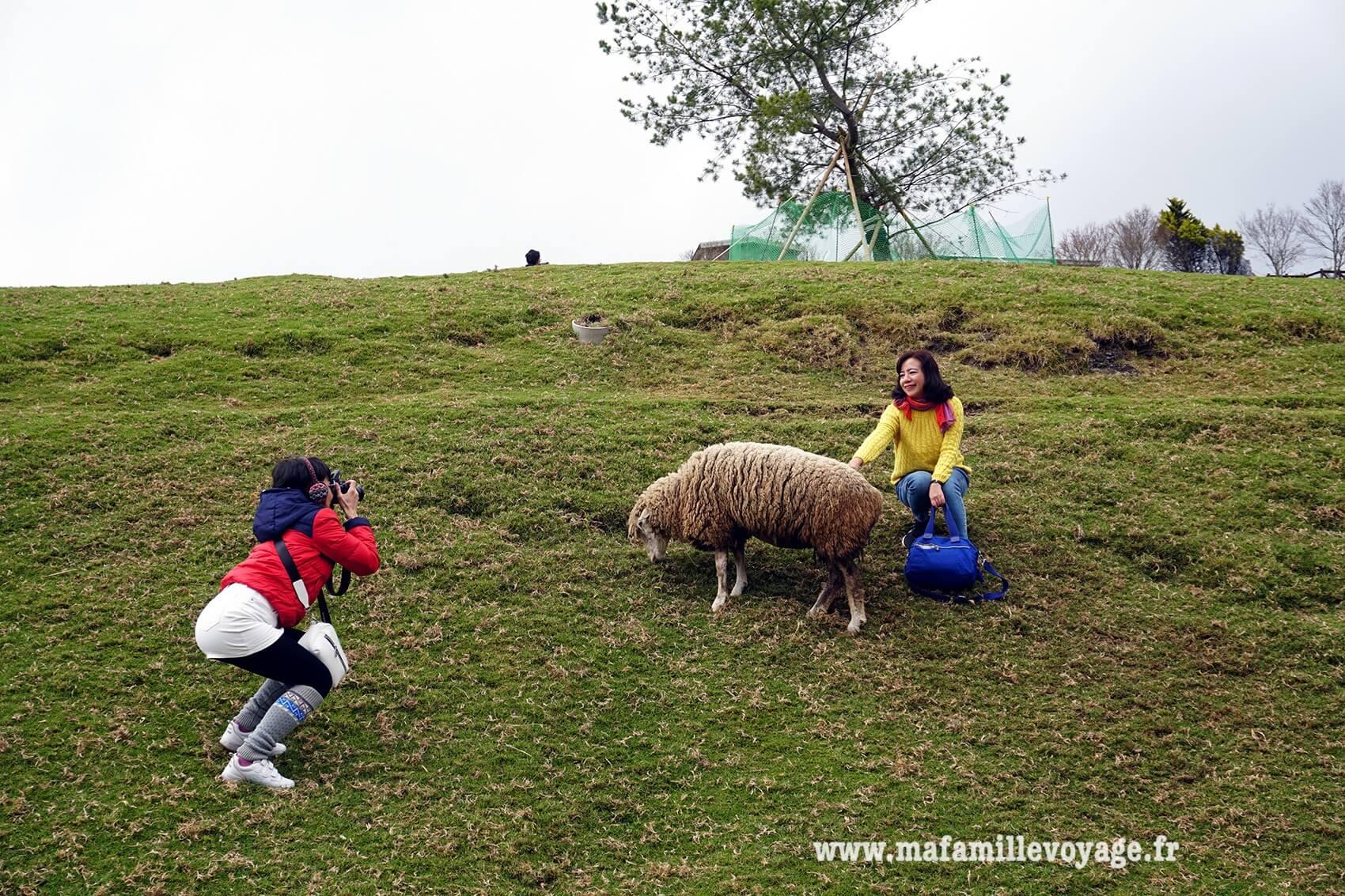 La photo souvenir avec le mouton. Indispensable ! :D