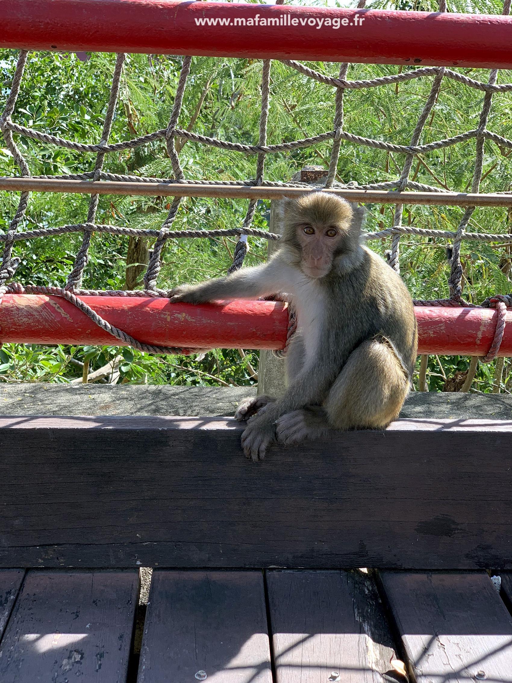 Un singe sur le vieux pont de Donghe