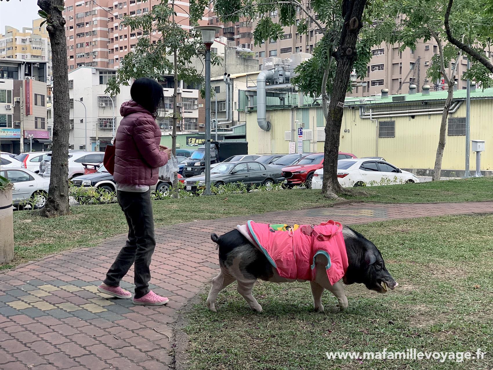 Cochons domestiques au parc. Normal, quoi !